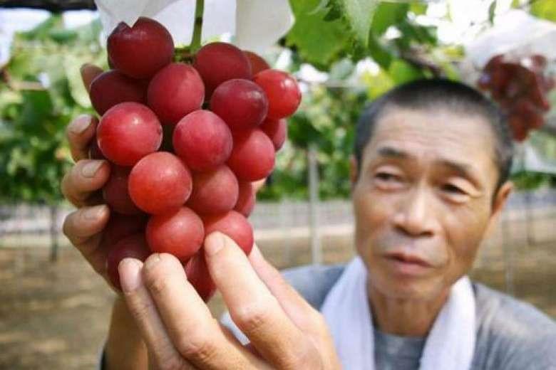 Trái cây đắt như vàng ròng ở Nhật Bản bán đầy Việt Nam