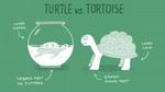 Phân biệt tên những động vật dễ nhầm trong tiếng Anh