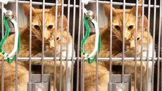 """Đỏ mặt khi xem cặp mèo """"tình tứ"""" với nhau"""