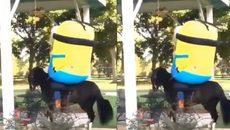 Cười ngất khi Minion cưỡi ngựa phi... nước đại