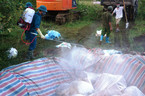 Đào hố, đổ vôi chôn hơn 5.000 con lợn chết trong lũ