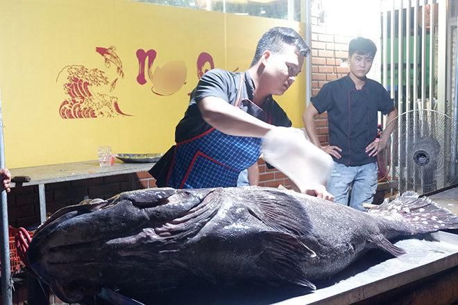 'Thủy quái' nặng hơn 1 tạ được đưa từ vịnh Thái Lan về Hà Nội