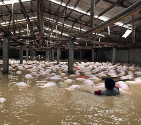 Doanh nghiệp, doanh nhân chung tay ủng hộ đồng bào Thanh Hóa bị lũ lụt