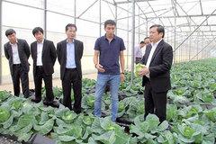 Trồng rau thu 10 triệu USD, bán chuối gom 30 tỷ đồng