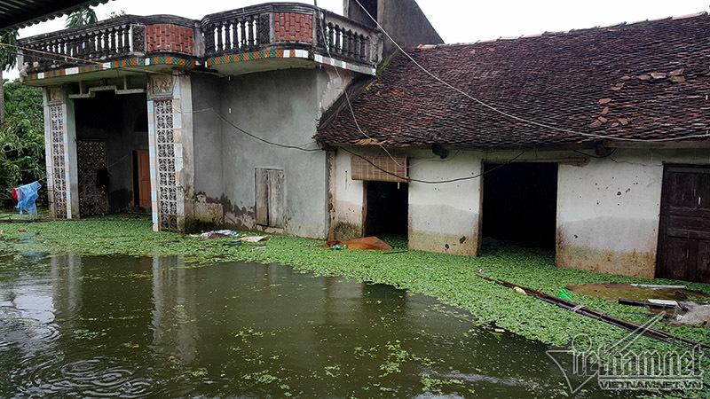 lũ lụt,mưa lụt,ngập lụt,lũ lụt ở Chương Mỹ,vỡ đê,mưa lũ,ngập lụt ở Hà Nội