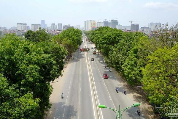 Hà Nội bắt đầu chặt, chuyển hơn 1.000 cây ở đường Phạm Văn Đồng