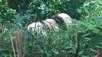 Phát hiện xác chết dưới mương nước nghi bị sát hại