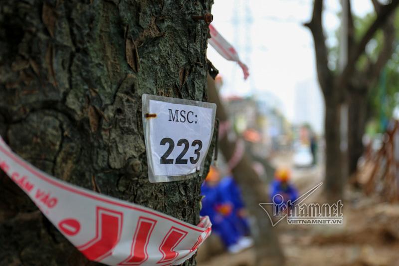Hà Nội đốn nghìn cây, đường Phạm Văn Đồng tắc cứng