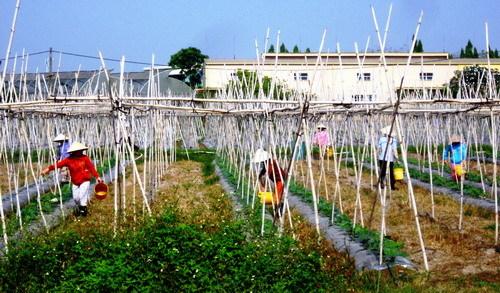 TP.HCM: Nâng chất tiêu chí môi trường chuẩn nông thôn mới