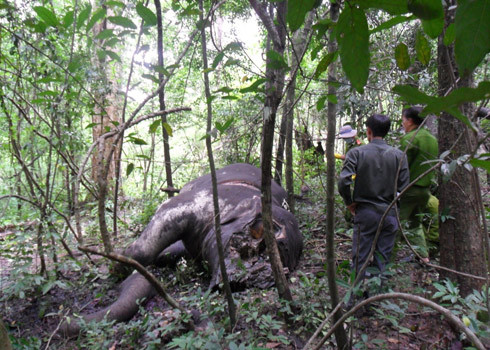Two elephants killed in Yok Don National Park