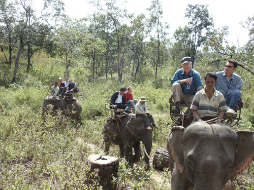 No one can save Vietnam's elephants?