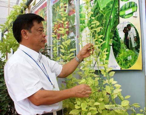 Safe vegetable project not welcomed