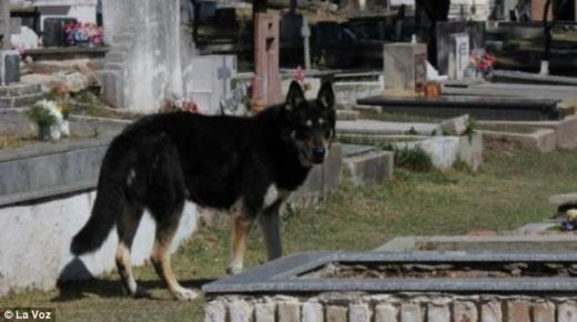 Những câu chuyện vô cùng cảm động về loài chó