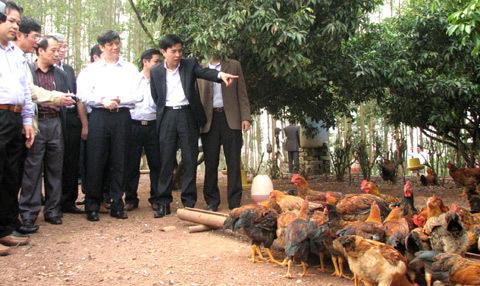 kiểm tra, gia cầm, Bắc Giang, cúm H7N9