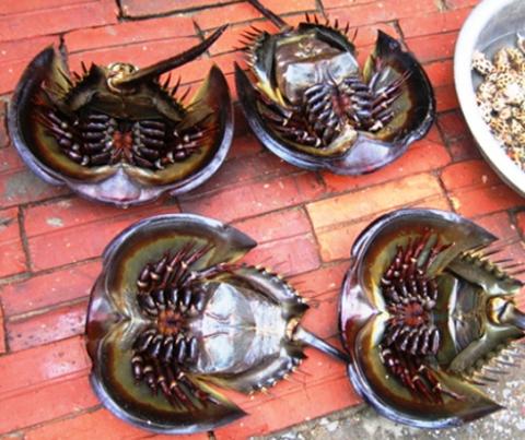 Việt Nam Xanh - Đặc sản biển kỳ dị trên bàn tiệc (Hình 2).