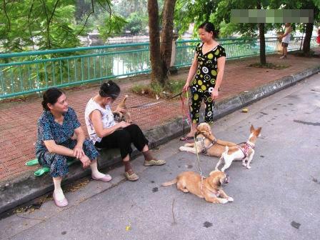 Nghề lạ: Dắt chó thuê, đọc sách mướn