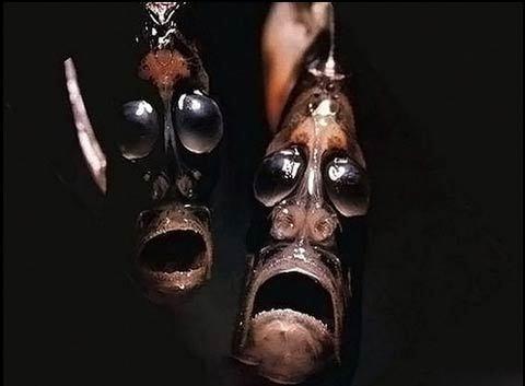 Những 'quái vật' dưới lòng đại dương