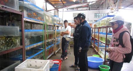 Làng buôn cá cảnh xuyên quốc gia