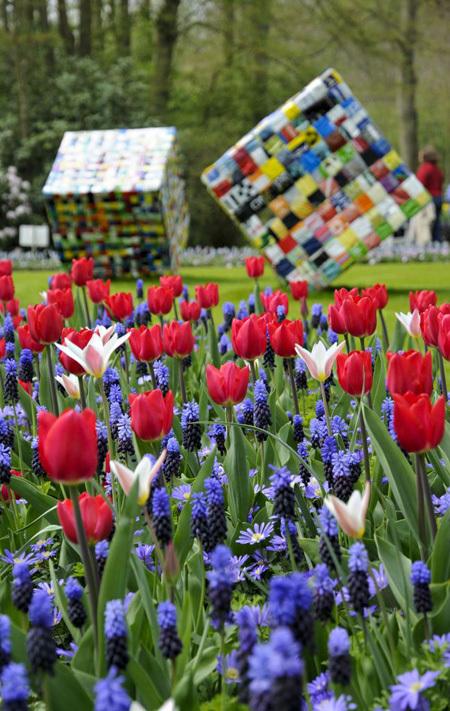 thị trấn Lisse, Amsterdam, Hà Lan, khu vườn, thế giới