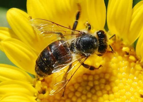 ong, tuyệt chủng, thế giới, bị đói