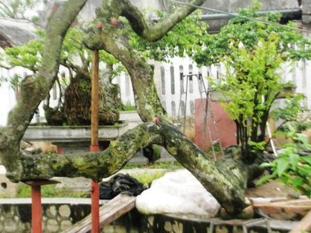 cây cảnh, siêu cây, cây độc...