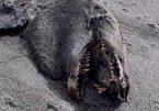 Rợn người xem xác quái vật trên bờ biển New Zealand