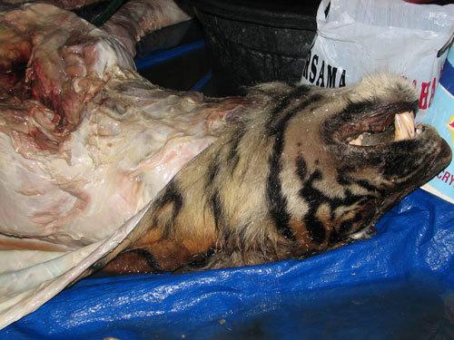 Cao hổ cốt từ thuốc phiện và xương chó