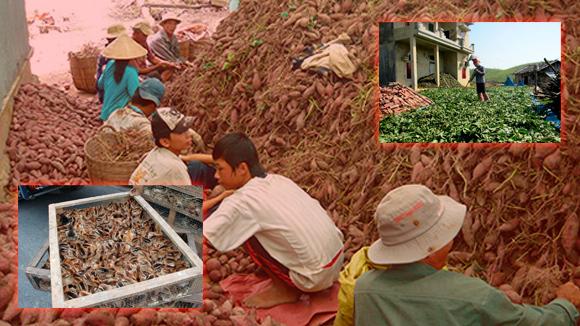 Việt Nam, bãi 'phế thải' thực phẩm bẩn Trung Quốc