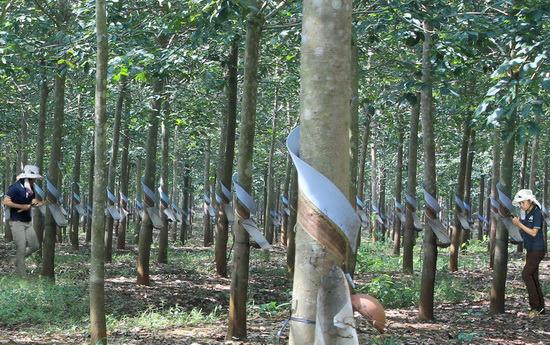 Bị cáo buộc 'phá rừng', 2 ngày bầu Đức mất 300 tỷ