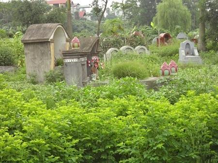 rau, nghĩa địa, bẩn, kinh hoàng