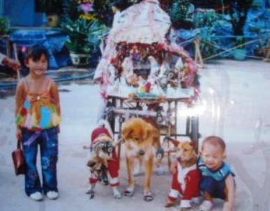 xe tam khuyển, chó kéo xe, Tây Ninh