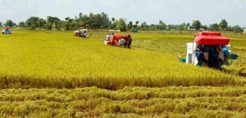 tam nông, xuất khẩu lúa gạo, lương thực, nông thôn, nông dân, trợ giá lương thực, tạm trữ lương thực