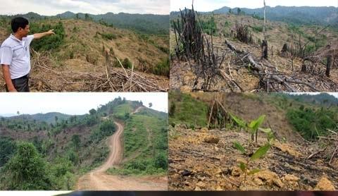 Đất rừng, xâm chiếm, 'chính quyền non yếu'