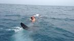 Liều mạng giỡn mặt với quái vật đại dương