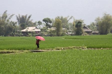 Hà Nội, TP.HCM cấp sổ đỏ chậm nhất nước