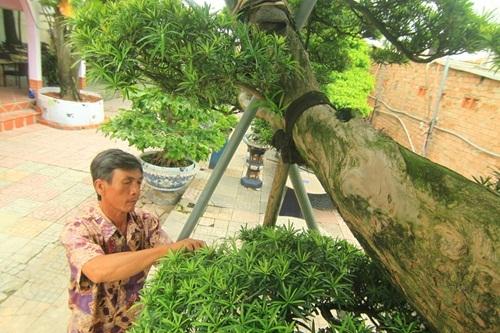 đại gia, Sài Gòn, tiền tỷ, cây tùng, cây cảnh, vạn niên, Phàn Xuân Thôn