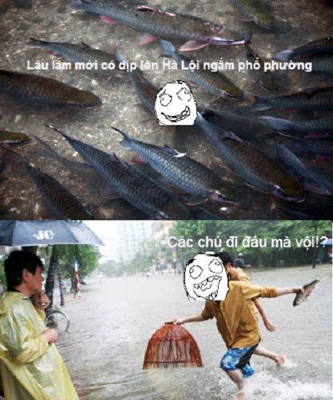 ngập, lụt, Hà Nội, ảnh chế