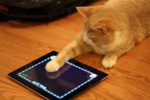 smarphone, iphone, samsung, sản phẩm công nghệ, mạng xã hội