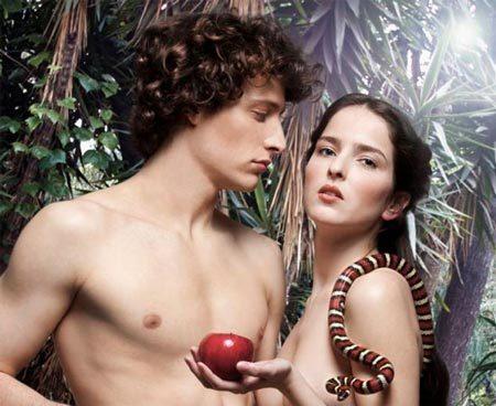 Adam và Eve, con người, dương vật, cậu nhỏ, không xương, baculum, động vật linh trưởng, tiến hóa