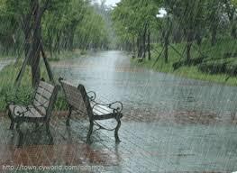Chiều Hà Nội đẫm ướt phố phường,   Khúc hát Lê Uyên Phương,   Nở trong mưa, đóa hoa vô thường ,  Thơm ngát