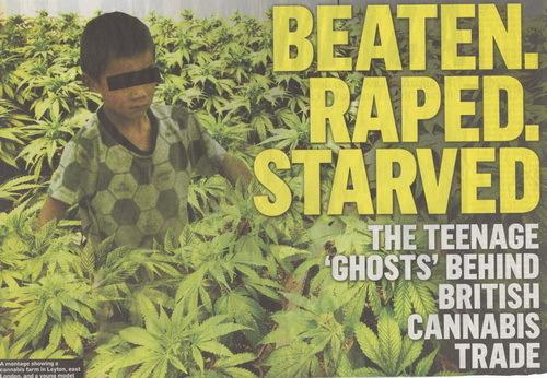 Anh, cần sa, ma túy, marijuana, người Việt, nông dân, tại Anh, tài mà, thuốc phiện, trồng cỏ, Việt