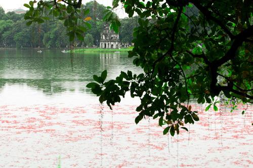 Hồ Gươm, Bờ Hồ, Hồ Hoàn Kiếm, lộc vừng, Hà Nội
