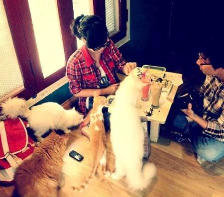 Cà phê, chó mèo, mèo, cún cưng, khách hàng, giới trẻ