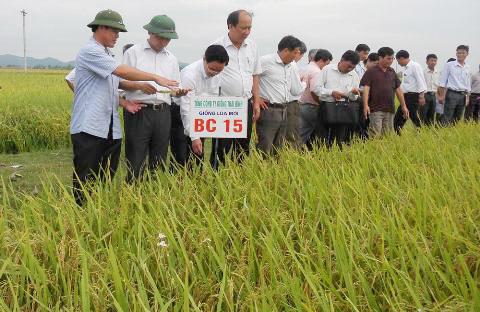 Giống cây trồng, chuyển nhượng bản quyền giống cây, bản quyền nông nghiệp, cây trồng, nông nghiệp