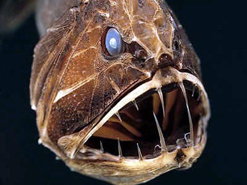 đại dương, quái vật, con mồi, phản xạ, động vật