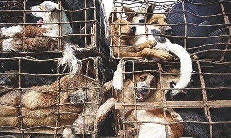 Tây choáng trước đại tiệc thịt chó ở Việt Nam