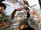 Giấu cá cảnh vào túi quần buôn vào New Zealand