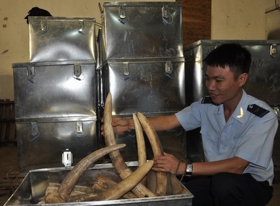 Những cách giấu ngà voi 'độc' nhất của dân buôn lậu