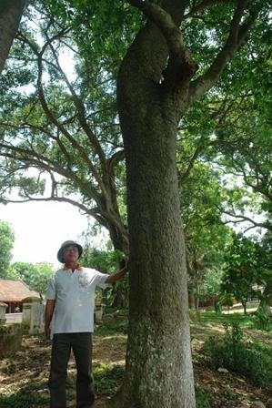 cây sưa, di tích, Bắc Ninh, Thuận Thành...