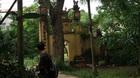 Một cây sưa 300 tuổi từng được đổi 1,2 tỷ đồng